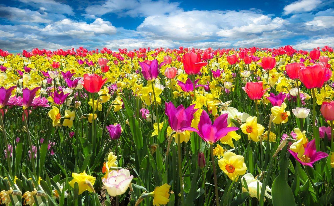 kwiaciarnia-opole